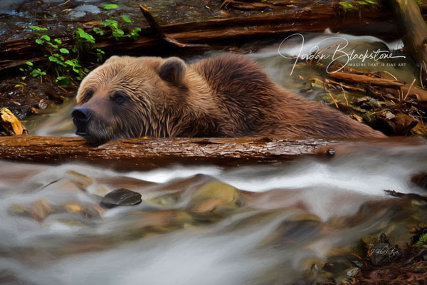 photo of Grizzly Bear, taken by Vancouver Island photographer Jordan Blackstone