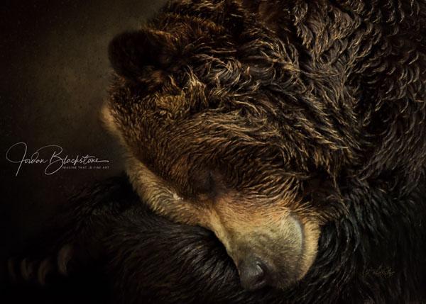 image of sleeping bear by Vancouver Island artist Jordan Blacksone from Imagine That