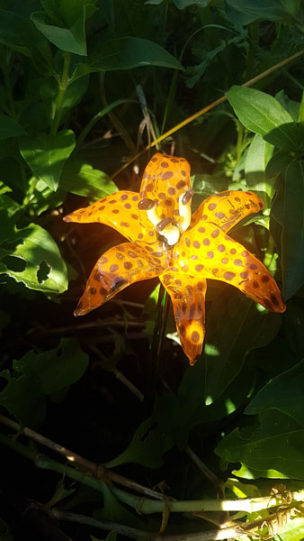 glass tiger lily sculpture, made on Saltspring Island Canada by Ojinika Glass