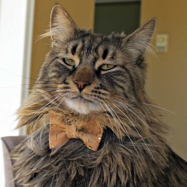 Cat wearing bow tie, tan with gold sparkles, Vancouver Island handmade product by Black Cat Stitches