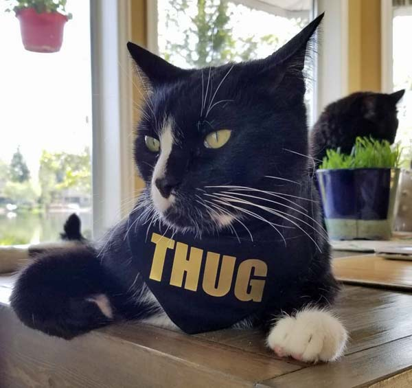 black cat wearing thug bandana around neck, handmade by Black Cat Stitches