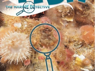 Marine Detective find the fish book, Vancouver Island underwater search and find book product