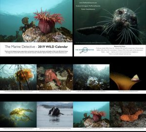 2019 Vancouver Island ocean calendar with whales, kelp, fish, shellfish + local products
